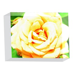 Orange Yellow Rose 5 x 7  Acrylic Photo Blocks