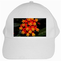 Orange And Red Weed White Cap