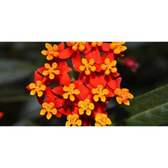 Orange and Red Weed YOU ARE INVITED 3D Greeting Card (8x4)