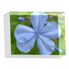 Blue Water Droplets 5 x 7  Acrylic Photo Blocks