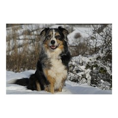 Australian Shepherd In Snow 2 Birthday Cake 3D Greeting Card (7x5)