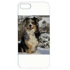 Australian Shepherd In Snow 2 Apple iPhone 5 Hardshell Case with Stand