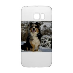 Australian Shepherd In Snow 2 Galaxy S6 Edge