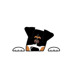 Peeping Bernese Mountain Dog YOU ARE INVITED 3D Greeting Card (8x4)