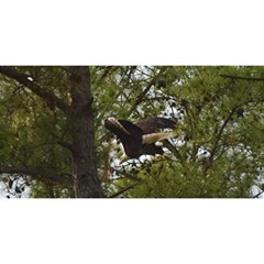 Bald Eagle YOU ARE INVITED 3D Greeting Card (8x4)