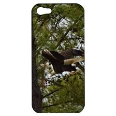 Bald Eagle Apple iPhone 5 Hardshell Case