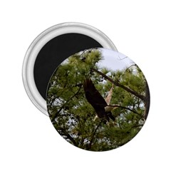Bald Eagle 2 2.25  Magnets