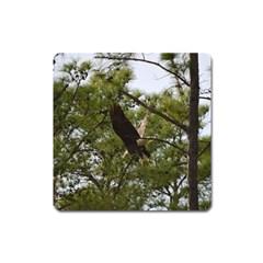Bald Eagle 2 Square Magnet
