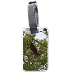 Bald Eagle 2 Luggage Tags (Two Sides)