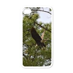 Bald Eagle 2 Apple iPhone 4 Case (White)