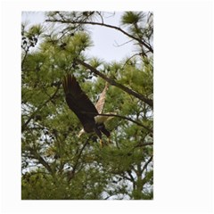 Bald Eagle 2 Large Garden Flag (Two Sides)