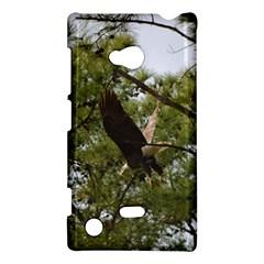 Bald Eagle 2 Nokia Lumia 720