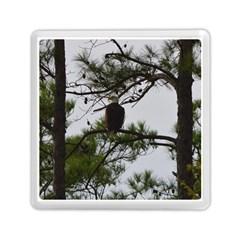 Bald Eagle 3 Memory Card Reader (Square)