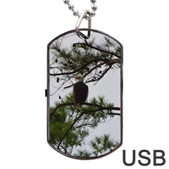 Bald Eagle 3 Dog Tag USB Flash (Two Sides)