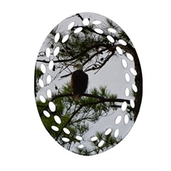 Bald Eagle 3 Ornament (oval Filigree)