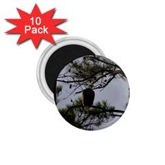 Bald Eagle 4 1.75  Magnets (10 pack)
