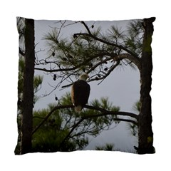 Bald Eagle 4 Standard Cushion Case (One Side)