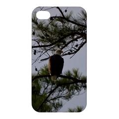 Bald Eagle 4 Apple iPhone 4/4S Hardshell Case