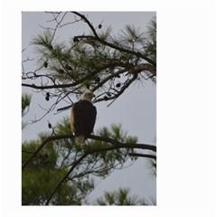 Bald Eagle 4 Small Garden Flag (Two Sides)