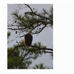 Bald Eagle 4 Large Garden Flag (Two Sides)