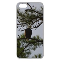 Bald Eagle 4 Apple Seamless iPhone 5 Case (Clear)