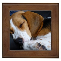 Beagle Sleeping Framed Tiles