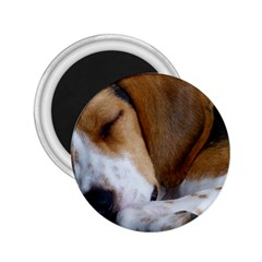 Beagle Sleeping 2.25  Magnets