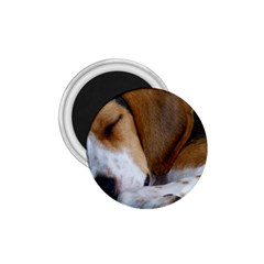 Beagle Sleeping 1.75  Magnets