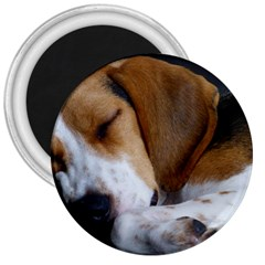 Beagle Sleeping 3  Magnets