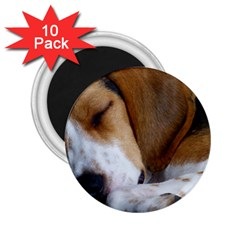 Beagle Sleeping 2.25  Magnets (10 pack)