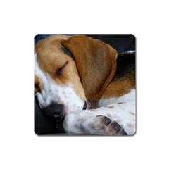 Beagle Sleeping Square Magnet