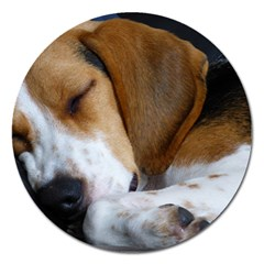 Beagle Sleeping Magnet 5  (Round)