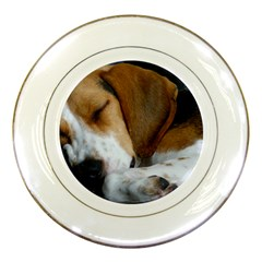 Beagle Sleeping Porcelain Plates