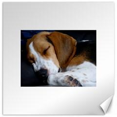 Beagle Sleeping Canvas 12  x 12