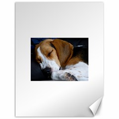 Beagle Sleeping Canvas 12  x 16