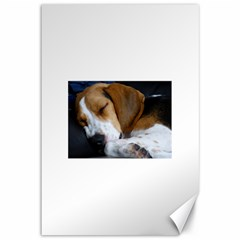 Beagle Sleeping Canvas 12  x 18