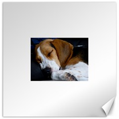 Beagle Sleeping Canvas 16  x 16