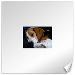 Beagle Sleeping Canvas 20  x 20