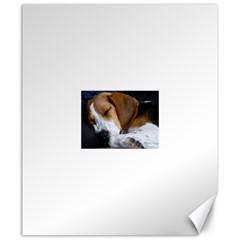 Beagle Sleeping Canvas 20  x 24