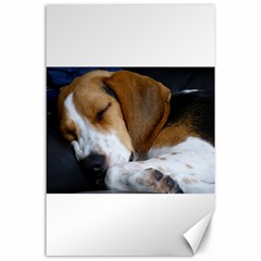 Beagle Sleeping Canvas 24  x 36