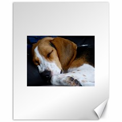Beagle Sleeping Canvas 11  x 14