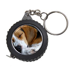 Beagle Sleeping Measuring Tapes