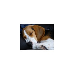 Beagle Sleeping 5.5  x 8.5  Notebooks