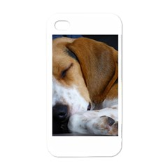 Beagle Sleeping Apple iPhone 4 Case (White)