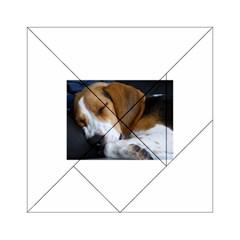 Beagle Sleeping Acrylic Tangram Puzzle (6  x 6 )