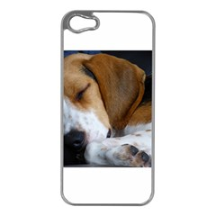 Beagle Sleeping Apple iPhone 5 Case (Silver)