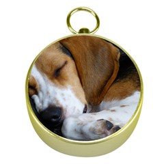 Beagle Sleeping Gold Compasses