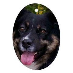 Australian Shepherd Black Tri Ornament (Oval)