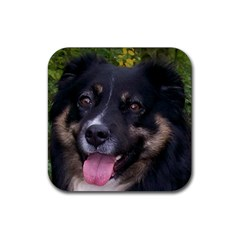 Australian Shepherd Black Tri Rubber Square Coaster (4 pack)