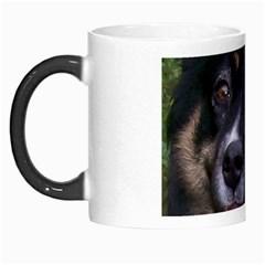 Australian Shepherd Black Tri Morph Mugs